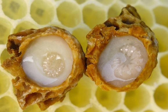 royal jelly 2